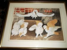FRAMED GLAZED ORIGINAL WATERCOLOUR BARN OWL & CHICKS EATING MICE HEWITT ?